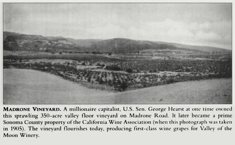 "A newspaper clip with a photo of Bedrock Vineyard before it was called Bedrock Vineyard taken in 1905. The caption reads, ""A millionaire capitalist, U.S. Sen. George Hearst at one time owned this sprawling 350-acre valley floor vineyard on Madrone Road. It later became a prime Sonoma County property of the California Wine Association (where this photograph was taken in 1905). The vineyard flourishes today, producing first-class wine grapes for Valley of the Moon Winery."""