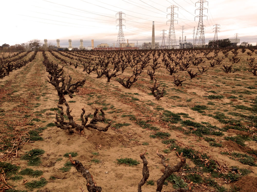 Evangelho Vineyard with view of the PG&E powerlines