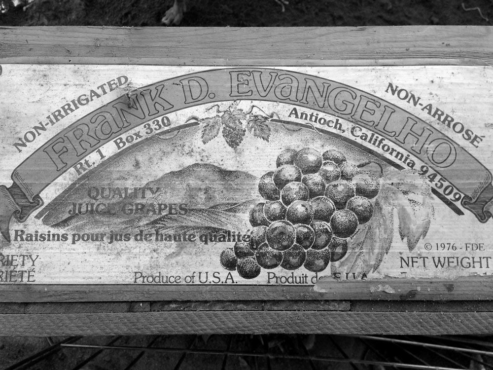 An old fruit crate with Frank D. Evangelho's name from circa 1976
