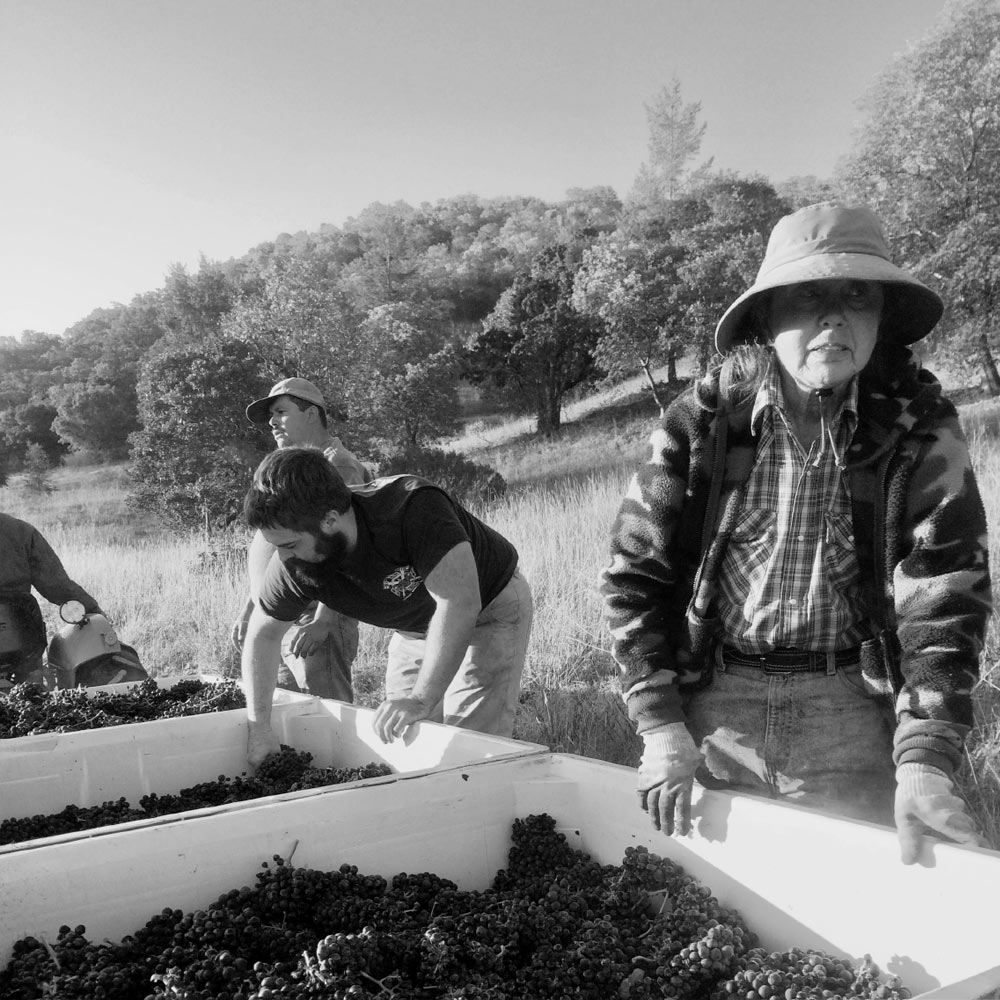 The picking crew at Pagani Ranch, including Norma Amantite